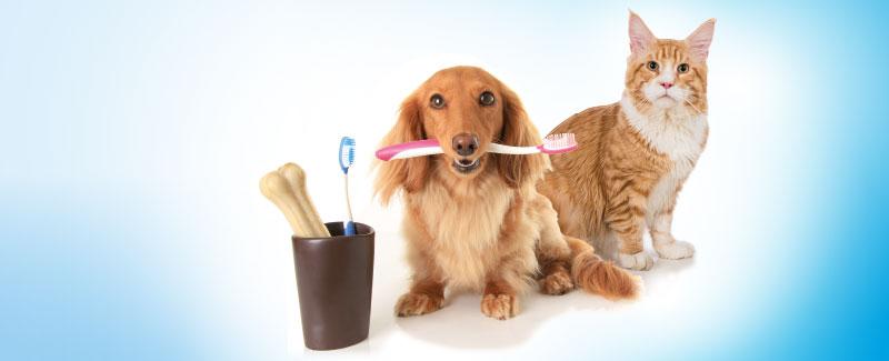 Gebitsproblemen bij hond en kat - intro