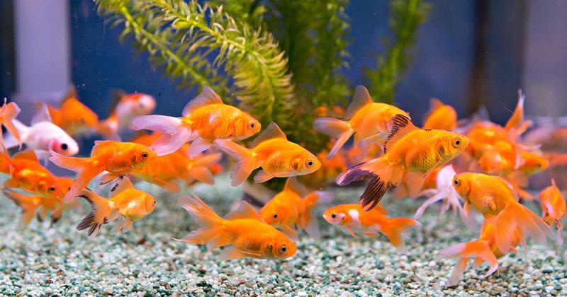 Prachtige aquariumafdeling